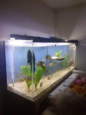 Vand acvariu complet/1000L/Plexiglas/Pesti piranha/Oscari/Sanitari