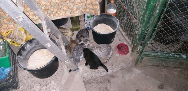 Donez 4 pisici - gratuit