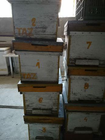 Cutii și rame pt stupi albine