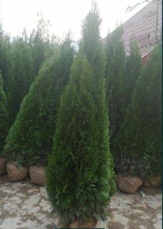 Plante verzi gazon rulou