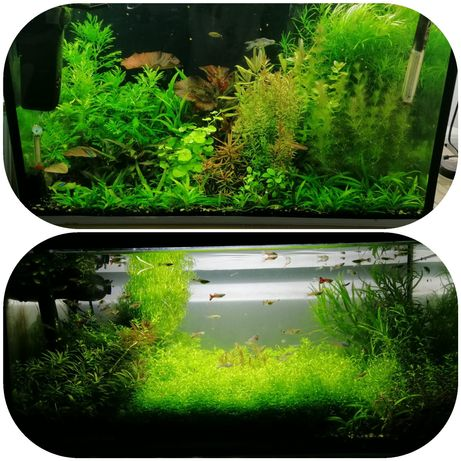 Plante acvariu de vânzare.