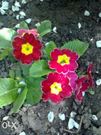 цветы многолетки,хвойные породы,лиственные деревья,альпийские цветы