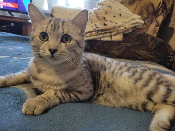 Отдам кота 1.5 года