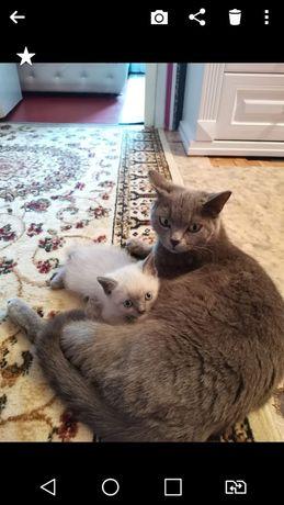 Отдам Котёнка беленького в хорошие руки