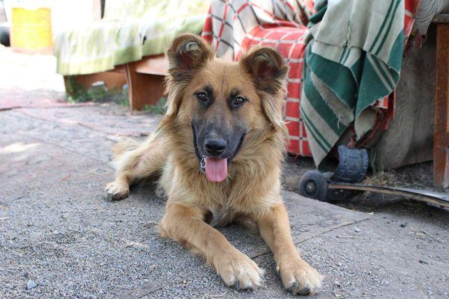 Дарю стерилизованную собаку