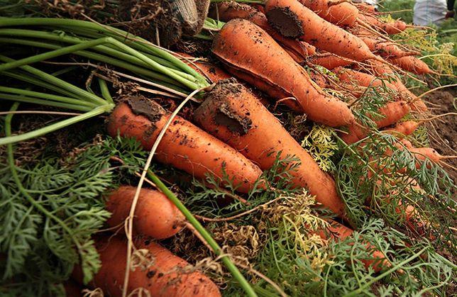 Продам морковь . Крупная и средняя.