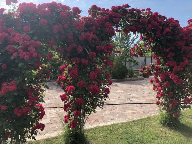 Саженцы плодовых деревьев, Плодовые деревья