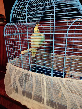 Продам попугайчиков с клеткой
