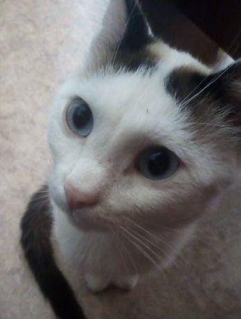 Я Самый Спокойной котик на свете)))