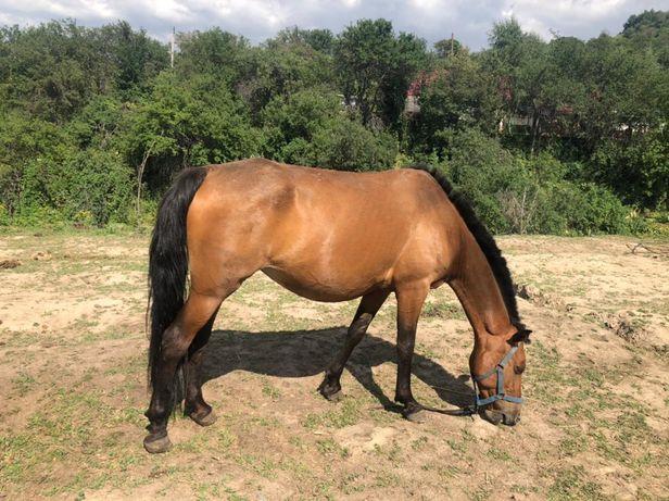 Продается лошади