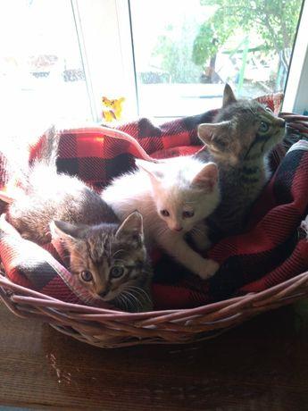 Котята 4 штуки 1 месяц