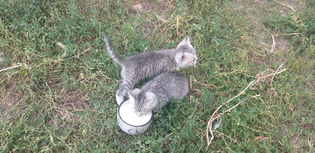 Котятки от мамы скотиша