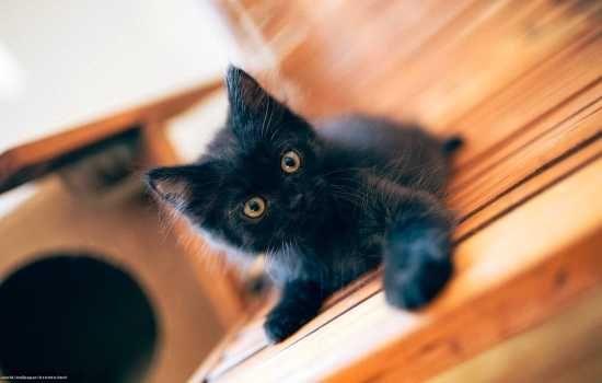 Отдадим в добрые руки котят.