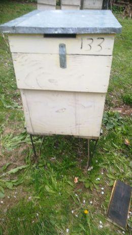 Lazi albine de vânzare