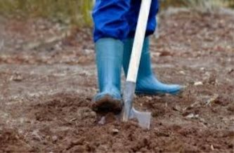 работа, подработку, прополоть,, перекопать огород, выкопать картошку