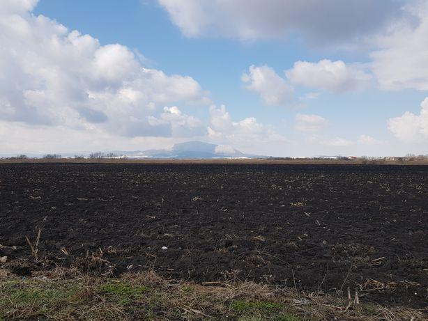 Pământ negru vegetal,si pamant galben nisipos pentru umplutura.