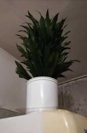 Floare verde-verde