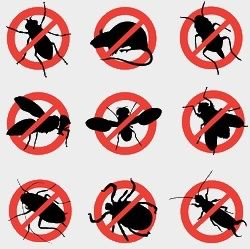 Уничтожение насекомых, дезинфекция