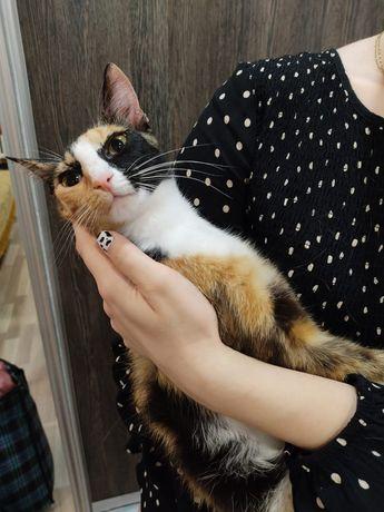 Отдадим милую кошку