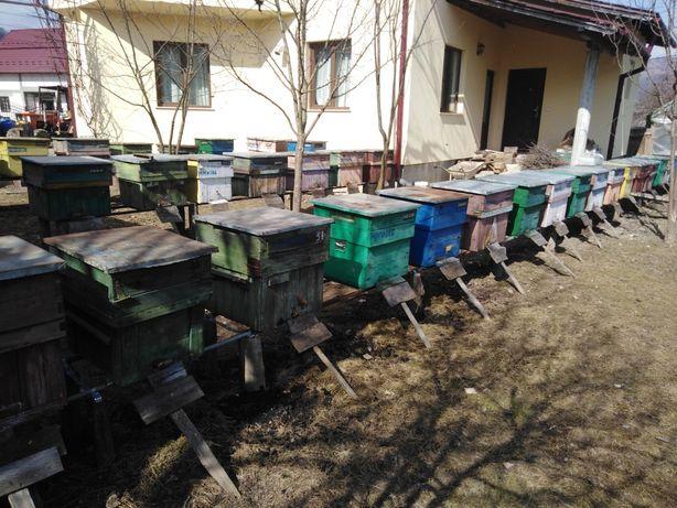 Albine de vânzare
