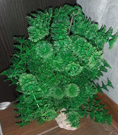 Растение за аквариум