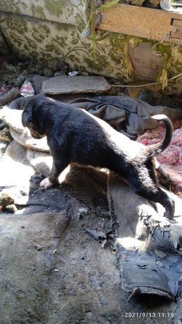 Продам щенят Таврическое