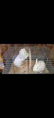 Милые,ручные,декоративные кролики