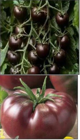 30 Seminte tomate negre mici sau mari/ Black Cherry si Neagra de Crim