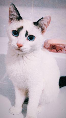 Кошка в хорошие руки