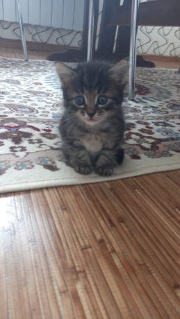 Котёнок 2 ай болған