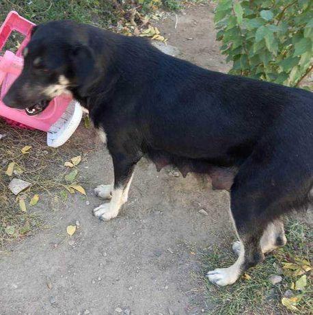Ищет дом собака взрослая