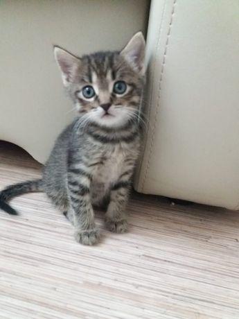 Отдам в добрые руки котята срочно!!!