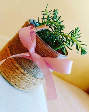 Cadouri pentru nasi/ parinti - cadouri pentru iubitori ai naturii