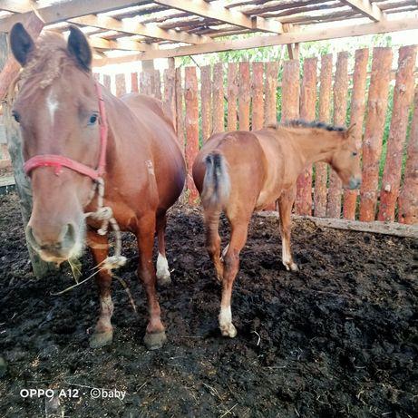 Продам лошадей,кабыла с жеребёнком и ещё один жеребчик