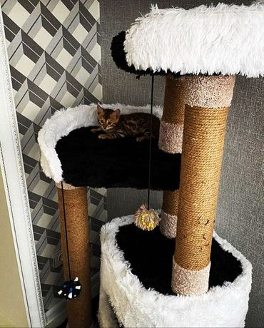 Производство Cat house когтеточки домики для кошек и собак
