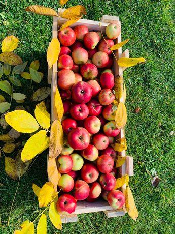 Vând mere, diverse soiuri