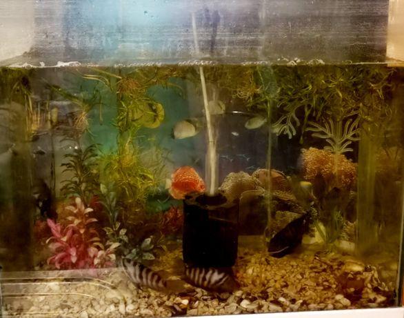Продам аквариум 80 л+рыбки