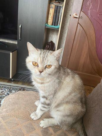 Отдам кошку в хорошие руки, умная, красивая, ласковая, 2 года