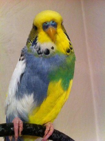 Лучшие попугаи города