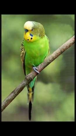 Классный красивый попугай