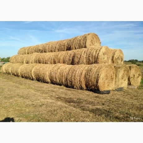 Продам сено свежий урожай 2021
