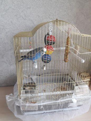 Срочно продам попугая