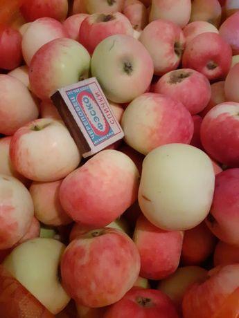 Продам яблоки дачные
