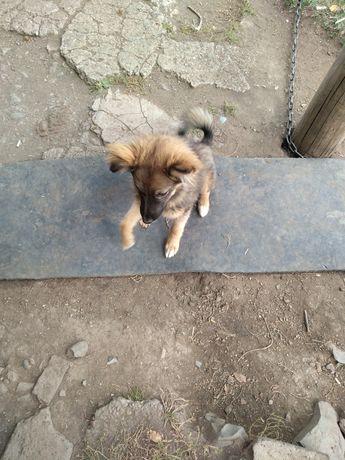 Отдам щенков, злющие, возраст 4 месяца