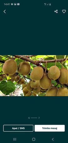 Pomi fructiferi kiwi