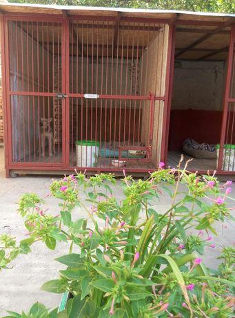 передержка - гостиница для ВЗРОСЛЫХ собак,3.000 тн в сутки