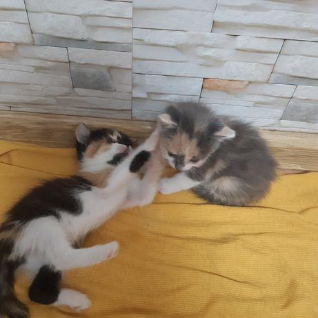 Отдам котят в заботливые руки