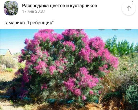 Кустарники и цветы