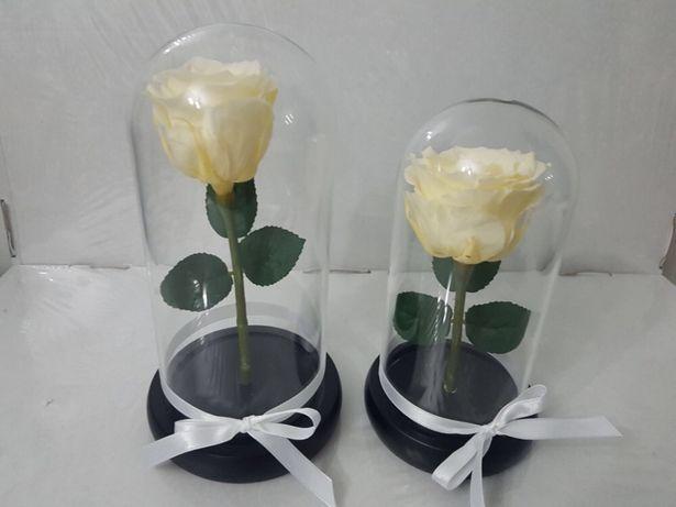 Trandafir conservat champain