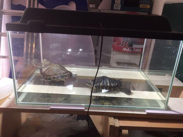 Продам черепах, одна болтшая вторая средняя